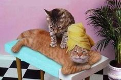 Cats Give The Best Massages (10 Gifs and Photos)