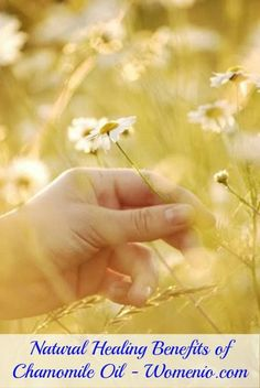 Natural Healing Benefits of Chamomile Oil - Top 15 Aromatherapy Oils and Their Therapeutic Benefits