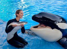 shamu the whale | Celebrity DJ! Introducing… Shamu Pancakes. | DDPP™ Chicago