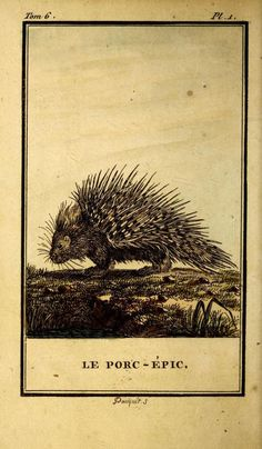 The porcupine. 1799.  ( I know it is not a hedgehog )