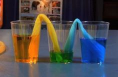 Demo capillary action. Science experiment: Watch as the blue and yellow water travel up the paper towel, making its way into the empty cup to make green water.
