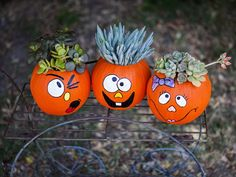 """Pumpkins with succulent """"hair-dos""""... cut three small drain holes in the bottom so that the plant roots don't rot, then use craft paint for faces, add soil, & plant succulent inside pumpkin"""