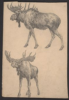 Citation: Sketch of two moose, between 1895 and 1974. Benson Bond Moore papers, Archives of American Art, Smithsonian Institution.