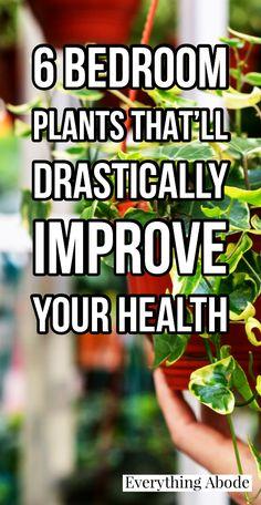 Lavender Plant Care, Air Cleaning Plants, Inside Plants, Best Indoor Plants, Bedroom Plants, Medicinal Plants, Growing Plants, Lawn And Garden, Houseplants