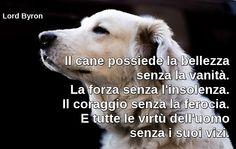 Il cane possiede la bellezza senza la vanità. La forza senza l'insolenza. Il coraggio senza la ferocia. E tutte le virtù dell'uomo senza i suoi vizi.  Lord Byron