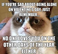 Valentine's Day - Grumpy Cat Reveals a Bitter-Sweet Reality. Thanks Grumpy Cat Grumpy Cat Quotes, Funny Grumpy Cat Memes, Funny Animal Jokes, Funny Jokes, Grumpy Kitty, Cat Jokes, Grumpy Car, Funny Cat Quotes, Angry Cat Memes