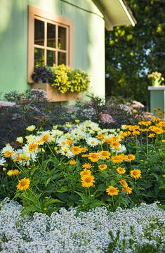 15 best perennials for spring images in 2019 flowers flowers rh pinterest com