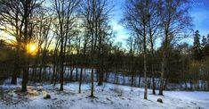 arbres 4 saisons