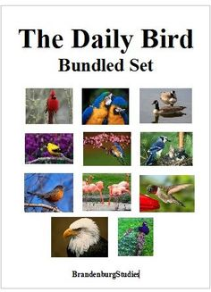 The Daily Bird Bundled Set - Brandenburg Studies | CurrClick