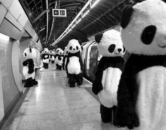 The pandas have finally found us.