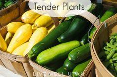 When to plant yor garden in Utah LivewellUtah.org