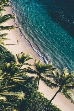 Beach life would be the best life Am Meer, Belle Photo, Beautiful Beaches, Beautiful World, Trees Beautiful, Wallpaper Backgrounds, Summer Backgrounds, Wallpaper Ideas, Nature Wallpaper