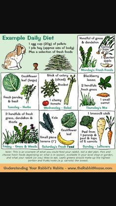 Pet Bunny Rabbits, Meat Rabbits, Raising Rabbits, Baby Bunnies, Vegetables For Rabbits, Food For Rabbits, What To Feed Rabbits, Dwarf Bunnies, Bunny Cages