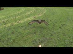 http://www.huffingtonpost.com/2011/08/08/slow-motion-eagle-owl-video_n_921033.html