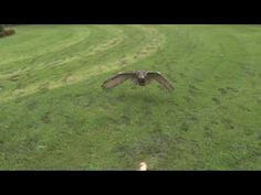 http://www.huffingtonpost.com/2011/08/08/slow-motion-eagle-owl-video_n_921033.html