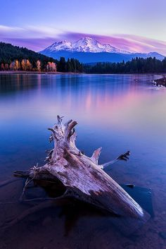 """"""" coiour-my-world: """"Solitude Mount Shasta California, Lake Shasta, Lenticular Clouds, Sacred Mountain, Solitude, Northern California, Beautiful Landscapes, Cool Pictures, Nature"""