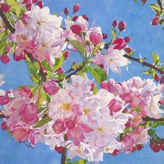 """""""Happy"""" watercolor by Cara Brown. Life in Full Color Botanical Drawings, Botanical Art, Botanical Illustration, Illustration Art, Watercolor Flowers, Watercolor Paintings, Flower Paintings, Apricot Blossom, Cherry Blossom"""