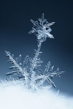 Snow flower | Flickr - Photo Sharing! http://www.flickr.com/photos/svatoslav_vrabec/