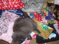 Underbara julklappar till dig och din kisse på www.katt4you.se