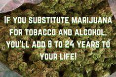 Cannabis / Marijuana Health Facts