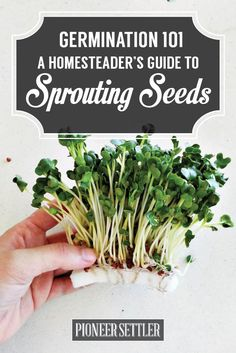Germinate Seeds - Seed Sprouting Ideas | How To Grow Your Own Food Self-Sufficiency Skills by Pioneer Settler http://pioneersettler.com/germinate-seeds-seed-sprouting-ideas/