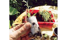 Lavendel vermehren Garden Living, Plants, Joy, Patio, Hydrangea Garden, Pruning Fruit Trees, Low Maintenance Shrubs, Glee, Plant