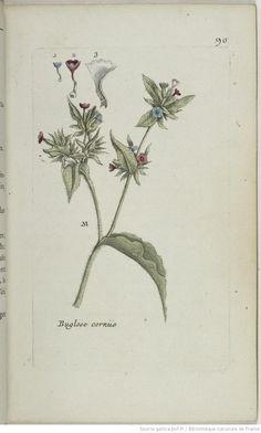 Des vertus des plantes par Macer Floridus, 1832 Ea0eb6679f339df9224a19548f0492d4