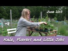 Katie's Allotment - June 2015 - Kale, More Flowers and Little Jobs