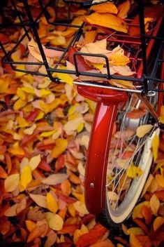 This Ivy House autumn.quenalbertini: Fall leaves and bicycle