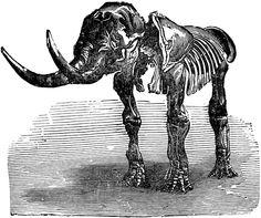 Mastodon giganteum