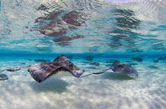 cayman-stingray9.jpg (3249×2160)