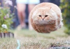 Hover cat ingaged