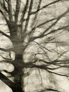 Motion blur by Julieanne Kost
