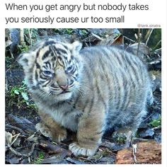 Animal Pictures Memes to Make You Laugh - 1