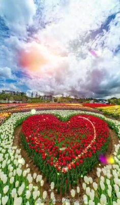 Beautiful Flowers Wallpapers, Beautiful Photos Of Nature, Beautiful Nature Wallpaper, Beautiful Gif, Nature Pictures, Beautiful Roses, Good Night Gif, Good Night Image, Flower Wallpaper