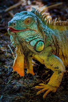 """Shot taken at Zoo Hof (Germany)  For more info visit my blog: <a href=""""www.gruene-linse.de"""">Gruene Linse</a>"""