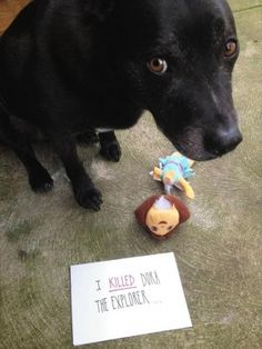 The Dog Killed Dora. Dog shaming!