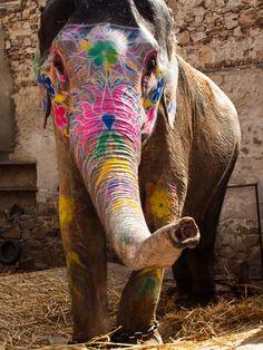 #India: Elefante decorado