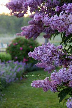 Aiken House & Gardens: A Misty Morn in the Garden