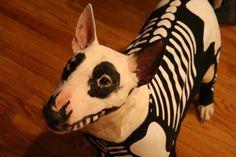 Dog costume, I love Halloween!!!!