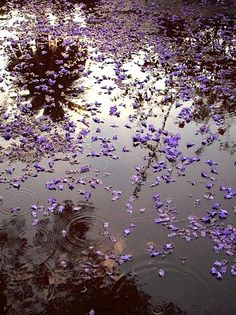 The apple trees were in full bloom, the scent enveloped us in a heady, almost palpable mist, and pale petals rocked on the glittering surface of the water and lay in white mats against the river banks. (Pauline Gedge, Scroll Of Saqqara) Purple Haze, Shades Of Purple, Smell Of Rain, I Love Rain, Gothic, Walking In The Rain, When It Rains, All Things Purple, In The Tree