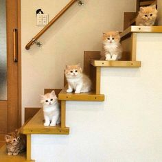 How to stair step your family when they are all the same size