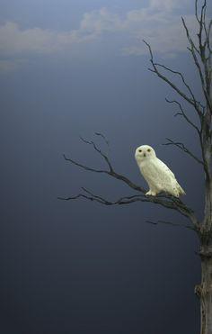 d-izzydreams:   Owl  ▲