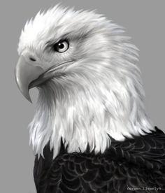 Bald Eagle Sketch - Bing Images