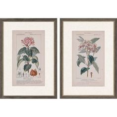 Modeled after vintage field guide pages, the Paragon Decor Botanique in Pink I Wall Art - Set of 2 features flower images with species information. The giclee print comes in a distressed gray frame with an embossed lip. Metal Wall Art, Framed Wall Art, Wall Art Prints, Artwork Wall, Wood Molding, How To Distress Wood, Wall Art Sets, Frames On Wall, Graphic Art