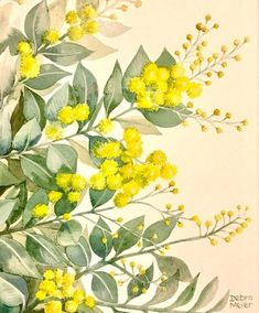 Botanical Illustration, Botanical Prints, Medical Illustration, Australian Native Flowers, Australian Bush, Watercolor Flowers, Watercolor Paintings, Australian Painting, My Art Studio