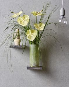 Yellow Anthurium for spring