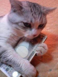 hahahah cats love monies