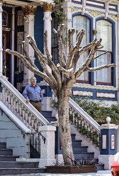 """Supervisor Scott Wiener is out to fix San Francisco's street tree program -- with cold, hard cash.  The District 8 supervisor will announce Monday that he is asking the city attorney to draft legislation for an """"Urban Forestry Fund"""" that would create a permanent funding stream f"""