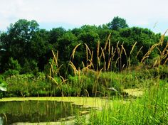 Cootes Watershed area, Dundas, ON